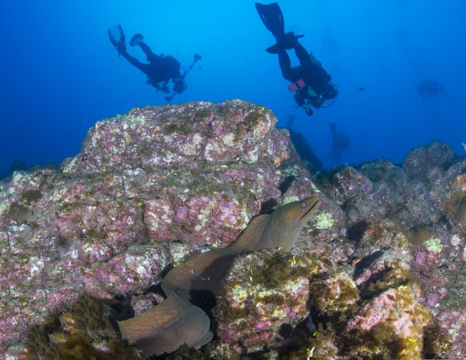 The Revillagigedo Islands